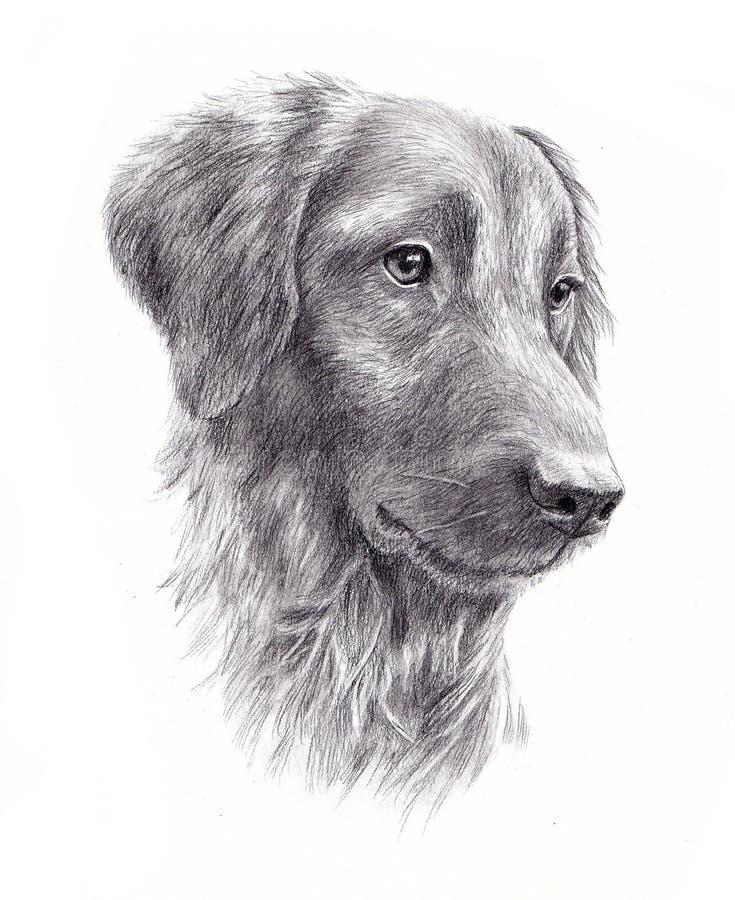 Das Porträt des Hundes stock abbildung