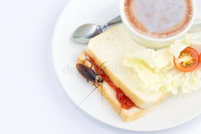Das Problem im Haus wegen der Schaben, die in der Küche leben Schabe, die Vollweizenbrot auf weißem Hintergrund isst lizenzfreies stockbild