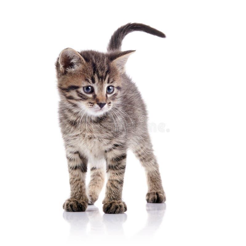 Das reizende Kätzchen lizenzfreie stockfotos
