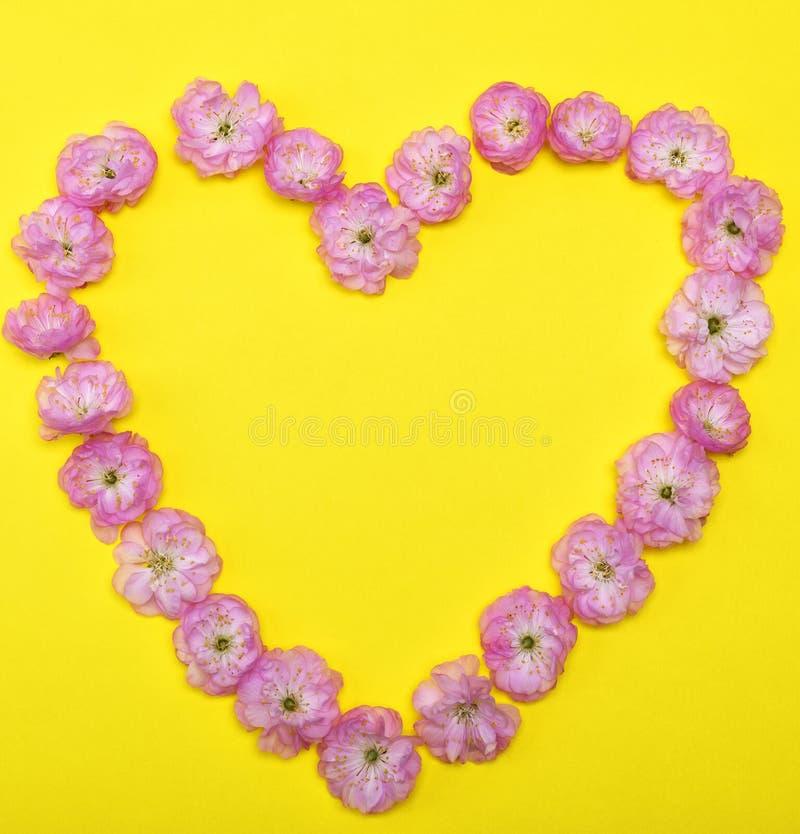 Das rosa Blühen knospt die Mandeln, die auf einem gelben Hintergrund trilobate sind stockbild