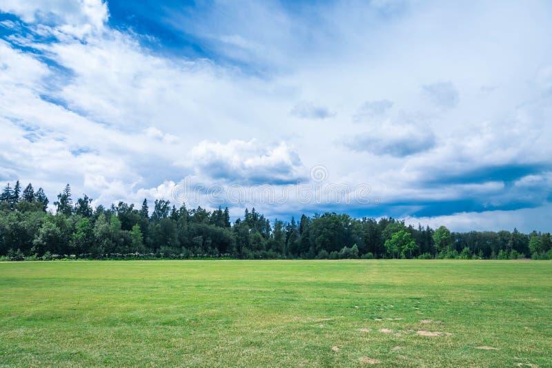 Das saftige grüne Feld mit einem kurzhaarigen gut-gepflegten Rasen am Sommertag Auf einem Hintergrund das hölzerne und das hoch d lizenzfreie stockfotos
