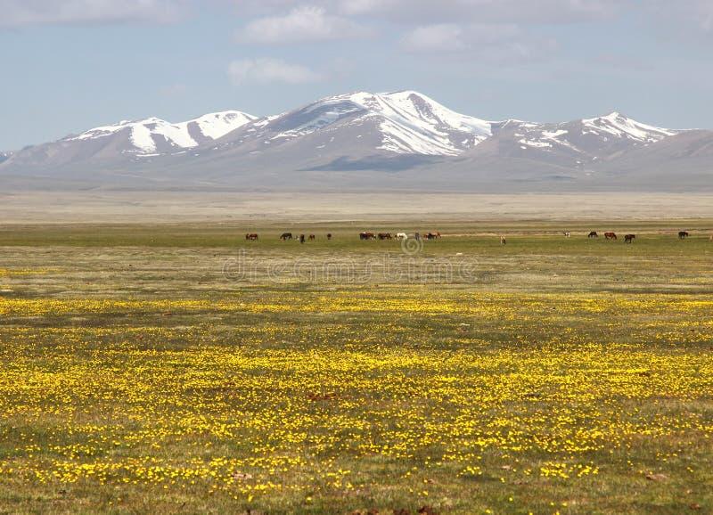 Das schöne szenische an Lied kul See, Naryn mit den Tian Shan-Bergen von Kirgisistan stockfoto