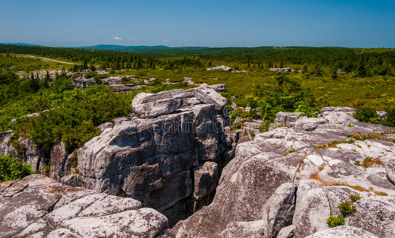 Das schroffe, felsige Gelände des Bären schaukelt, in Dolly Sods Wilderness, WV lizenzfreie stockbilder