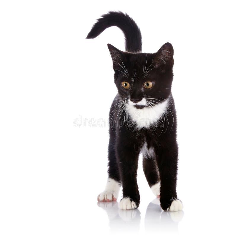 Das Schwarzweiss-Kätzchen kostet auf einem weißen Hintergrund stockfotografie