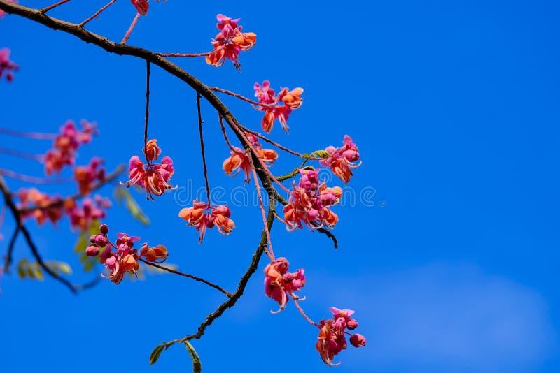 Das Sommergras verlässt die Blumen, um uns schön wirklich zu machen stockfotografie