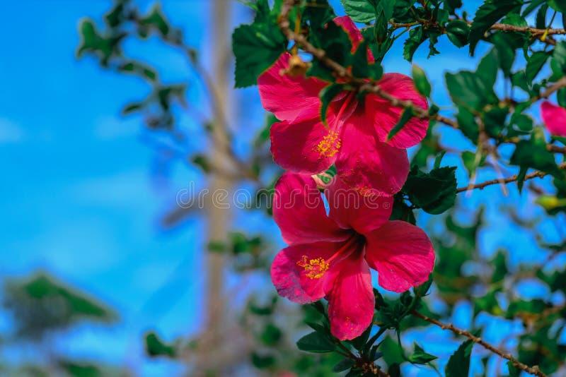 Das Sommergras verlässt die Blumen, um uns schön wirklich zu machen lizenzfreies stockbild