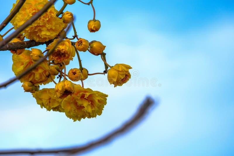 Das Sommergras verlässt die Blumen, um uns schön wirklich zu machen stockfoto