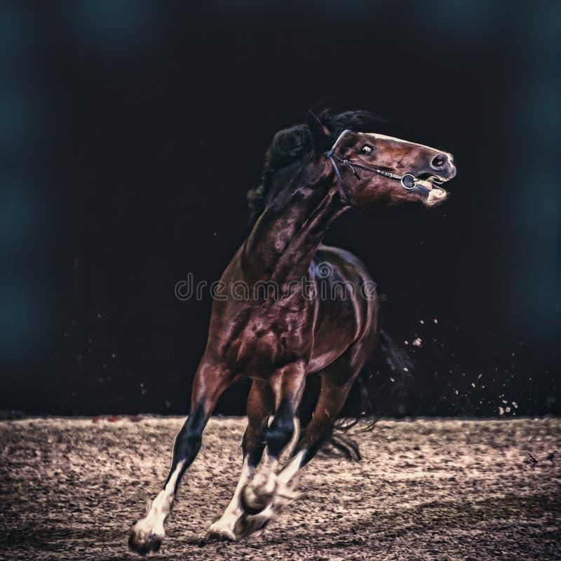 Das spülte braune Pferd in einem freien Galopp lizenzfreie stockfotografie