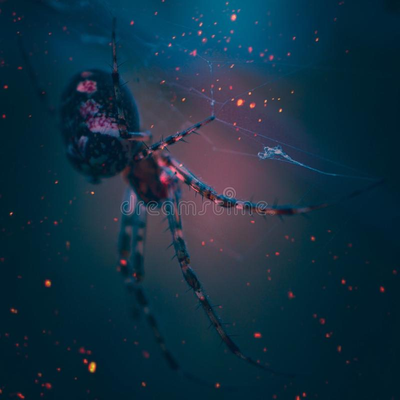 Das Spinnennetz mit Tropfen des Zauns lizenzfreie stockbilder