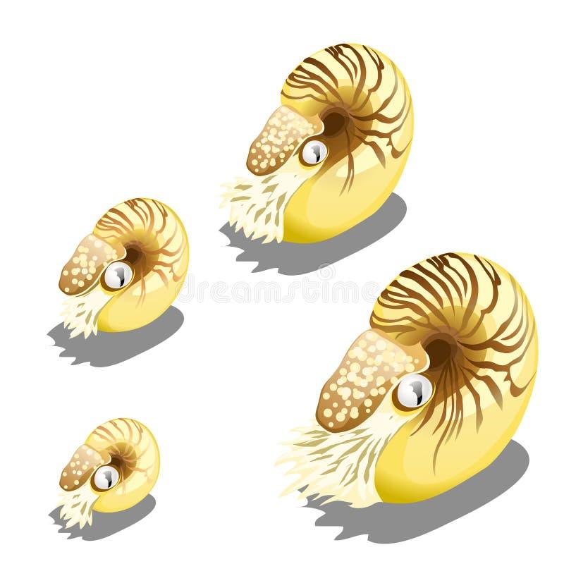Das Stadium des Wachstums der Nautilus pompilius Molluske lokalisiert auf einem weißen Hintergrund Eine Krake, ein Wal und ein De lizenzfreie abbildung