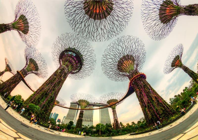 Das supertree Grove an den Gärten durch die Bucht, Singapur lizenzfreie stockfotos