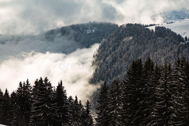Das Tal, das in den Wolken mit Baum bedeckt wurde, bedeckte Berge lizenzfreies stockfoto