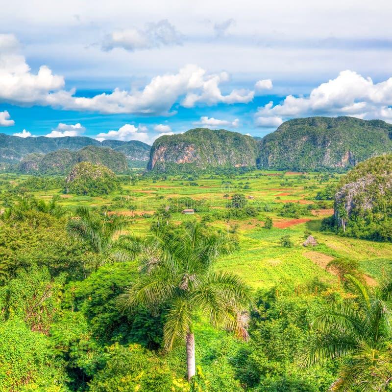 Das Tal von Vinales in Kuba stockbild
