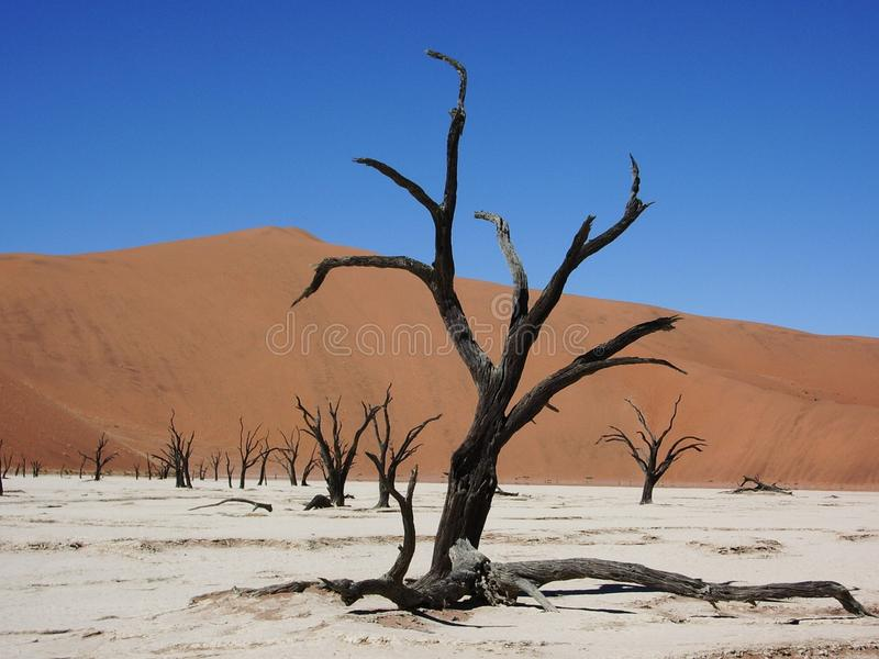 Das tote Sumpfgebiet lizenzfreies stockbild