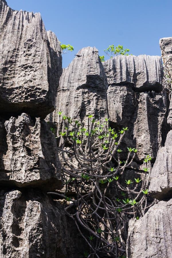 Das Tsingy von Ankarana stockbilder