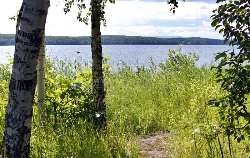 Das Ufer von einem See im Sommer stockfoto