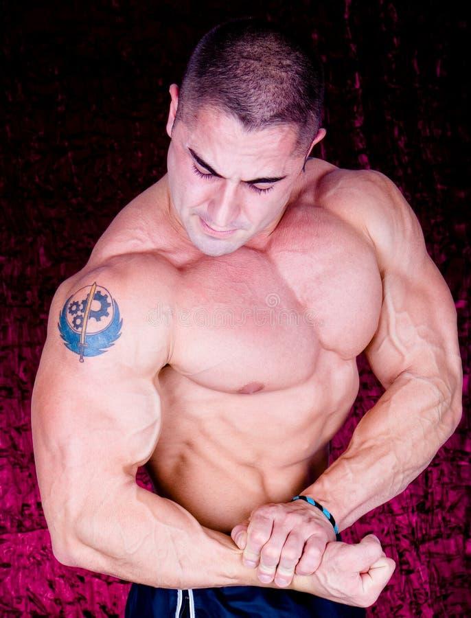 Das vollkommene muskulöse Baumuster stockfoto