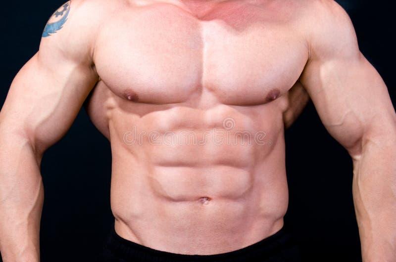 Das vollkommene muskulöse männliche Baumuster lizenzfreie stockfotos