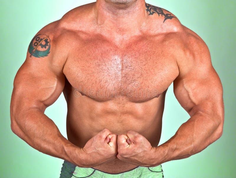 Das vollkommene muskulöse männliche Baumuster stockfotografie