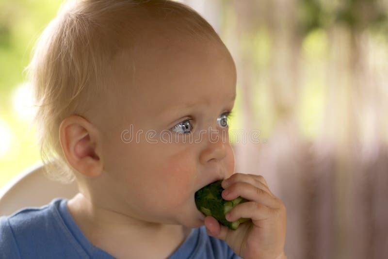 Das wachsame blondy Kleinkind, das eine Gurke essen und Kees beruhigen lizenzfreie stockfotografie