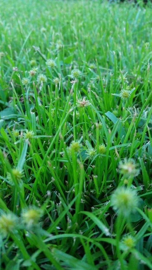 DAS WAHRE SCHÖNHEITS-GRÜN-NATUR-GRAS stockbilder
