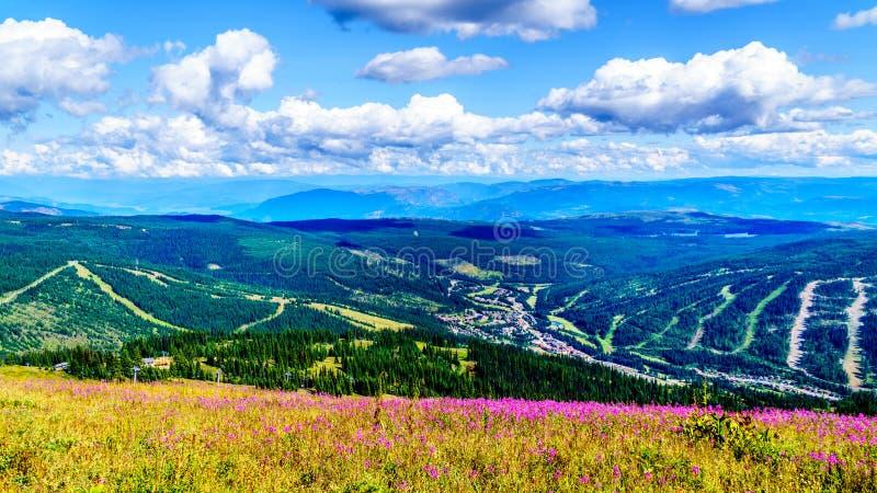 Das Wandern durch die Alpenwiesen, die in rosa Fireweed Wildflowers übersehen Sun bedeckt werden, ragt Dorf empor lizenzfreie stockbilder