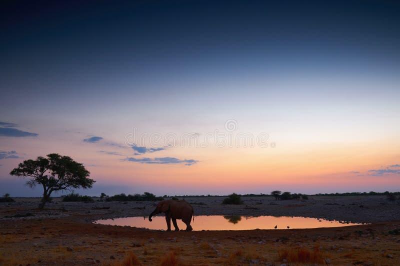 Das waterhole von Okaukuejo bei Sonnenuntergang lizenzfreie stockbilder