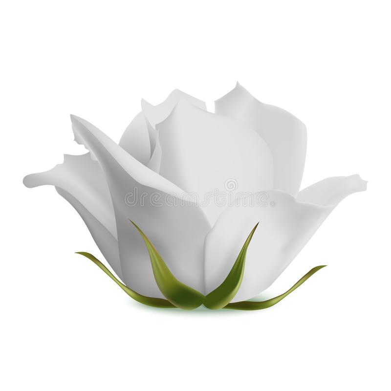 Das weiße Blühen stieg auf einen weißen Hintergrund Auch im corel abgehobenen Betrag stock abbildung