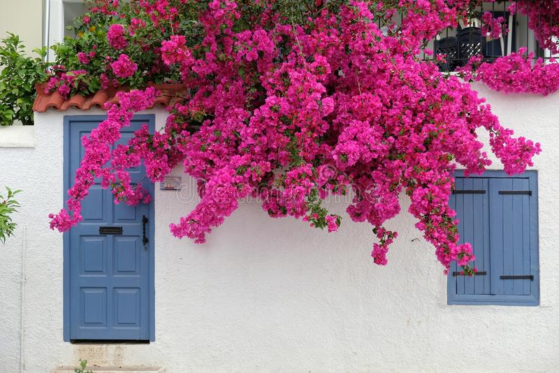 Das Weiße Haus mit blauer Tür und rosa Bouganvilla, Griechenland stockfotografie