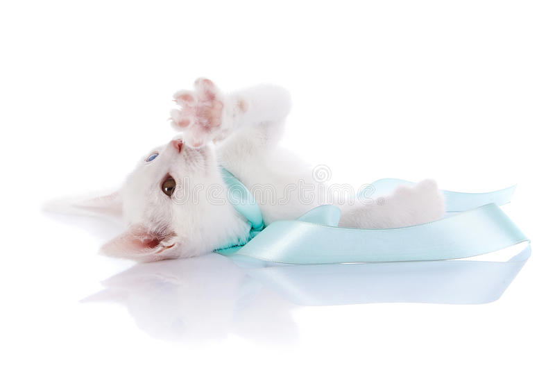 Das weiße Kätzchen mit mehrfarbigen Augen liegt auf einem weißen Hintergrund. lizenzfreies stockfoto