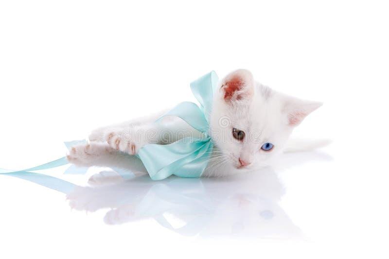Das weiße Kätzchen mit mehrfarbigen Augen und einem blauen Bogen liegt. lizenzfreie stockfotos