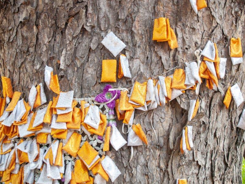 Das weiße orange Gewebe, das am Baum mit einem Seil gebunden wird, ist der Glaube von thailändischen Leuten stockfoto
