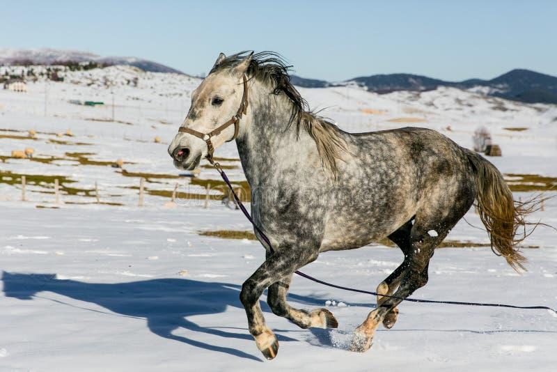 Das wilde Pferd in den Bergen lizenzfreies stockfoto