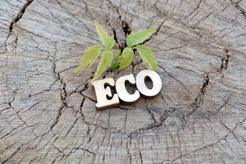 Das Wort ECO wird von den hölzernen Buchstaben auf einem alten Stumpf neben einem jungen grünen Sprössling gemacht Kopieren Sie R stockbild