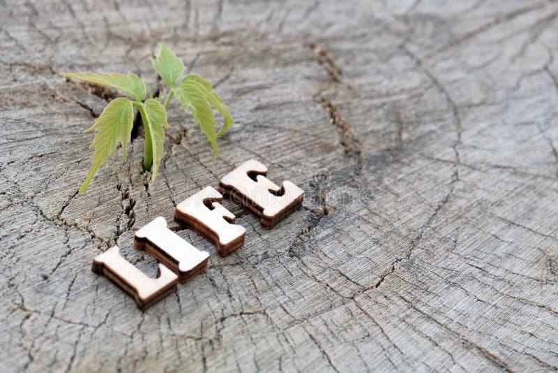 Das Wort LEBEN wird von den hölzernen Buchstaben auf einem alten Stumpf neben einem jungen grünen Sprössling gemacht Kopieren Sie stockbilder