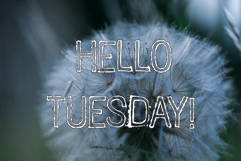 Das Wortschreiben simsen hallo Dienstag Gesch?ftskonzept f?r einen Gru? oder ein herzliches Willkommen zum dritten Wochentag stockfoto