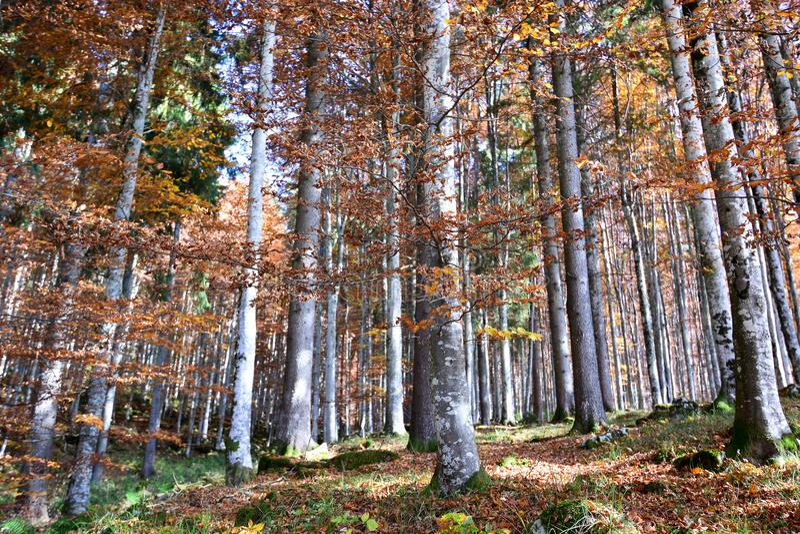 das Wunder der Farben der Natur lizenzfreies stockbild
