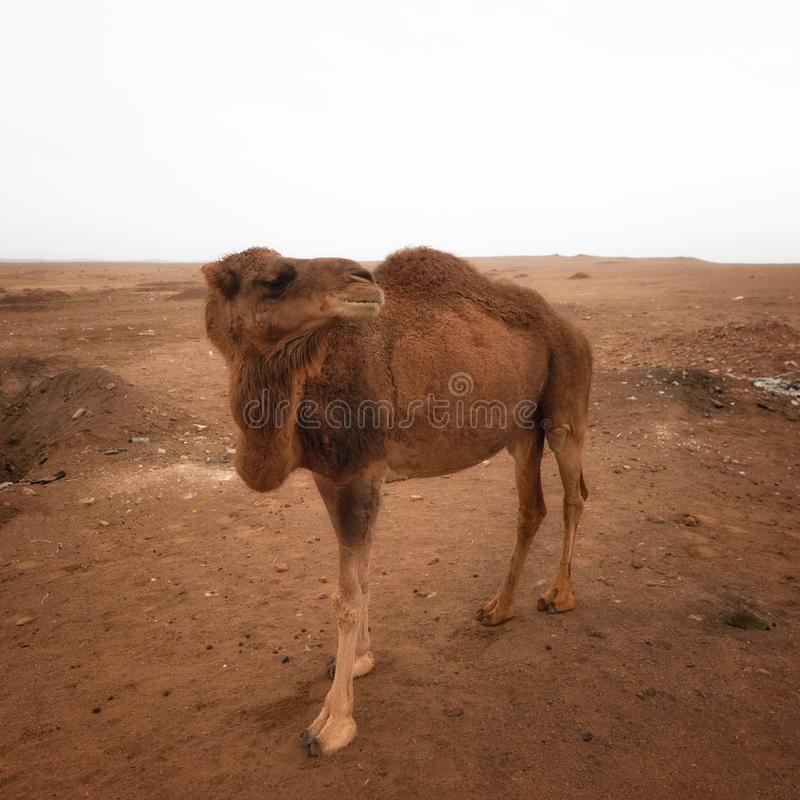 Dasht-e Lut Desert i östliga Iran som tas i Januari 2019 som tas i hdr royaltyfri foto