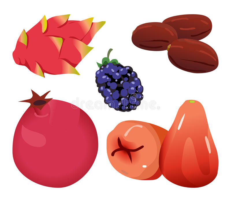 Data, Dragonfruit, björnbär, granatäpple och Rose Apple stock illustrationer