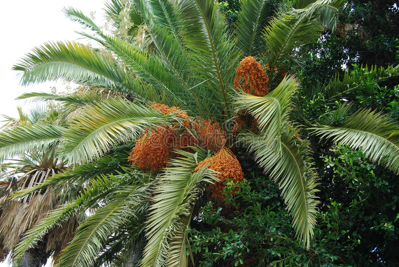 Data op de palm stock afbeelding