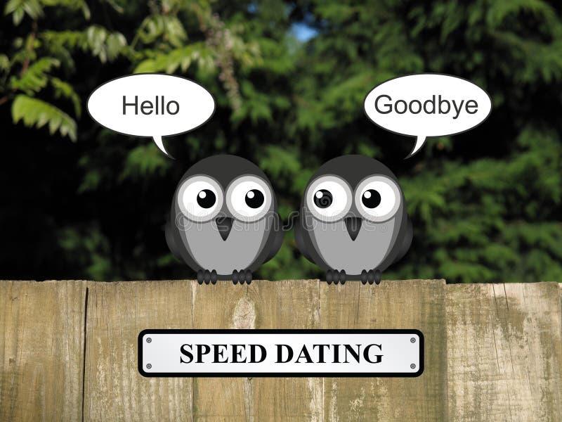 Datazione di velocità degli uccelli fotografia stock