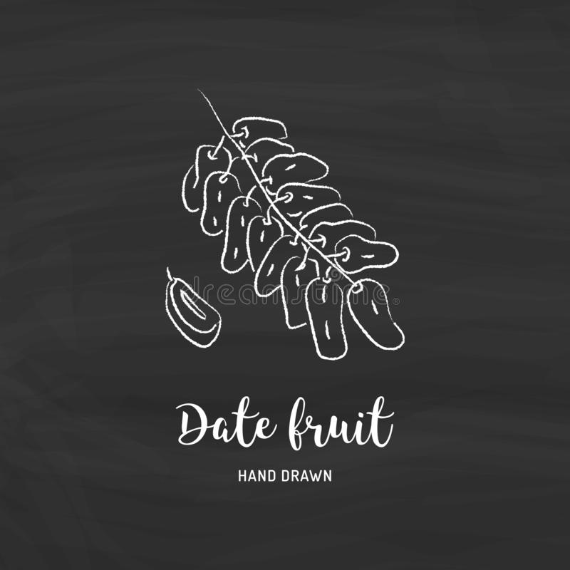 Date fruit drawing, dried dates. Sketch of date fruits with chalk on chalkboard. Vector illustration. Fig fruit drawing. Sketch of fig fruit with chalk on vector illustration