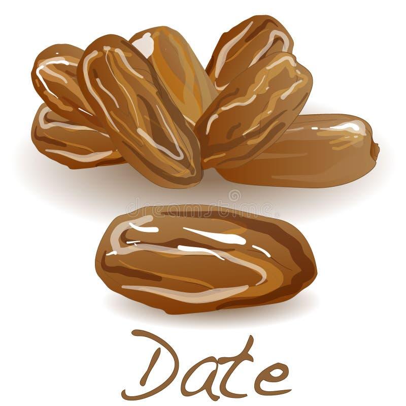 Date fruit dry. Vector illustration royalty free illustration