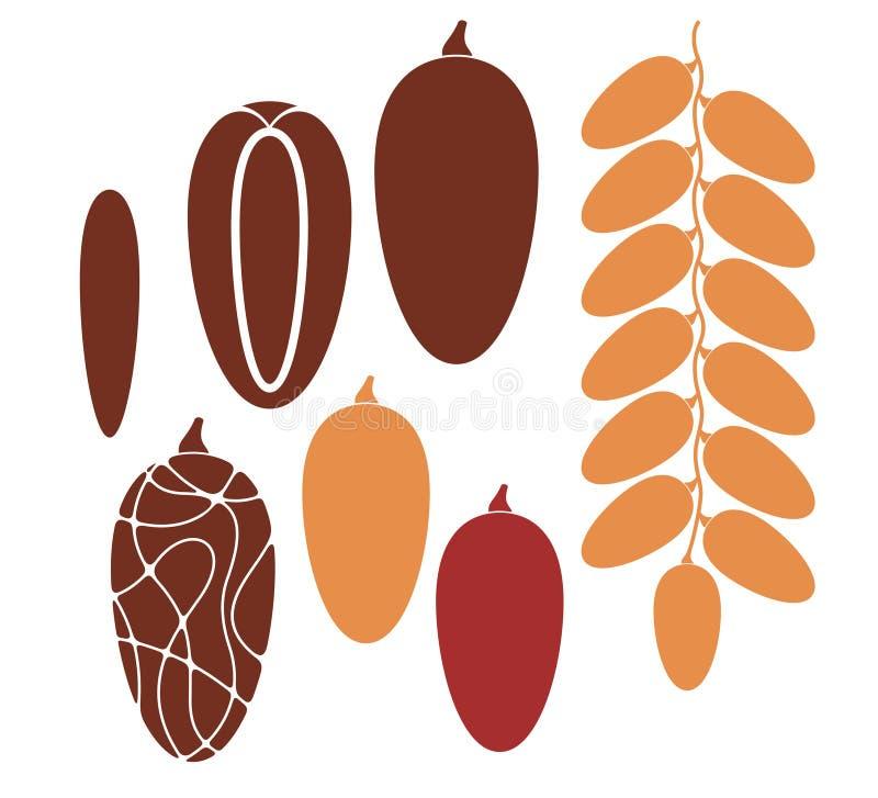 Date. Fruit vector illustration