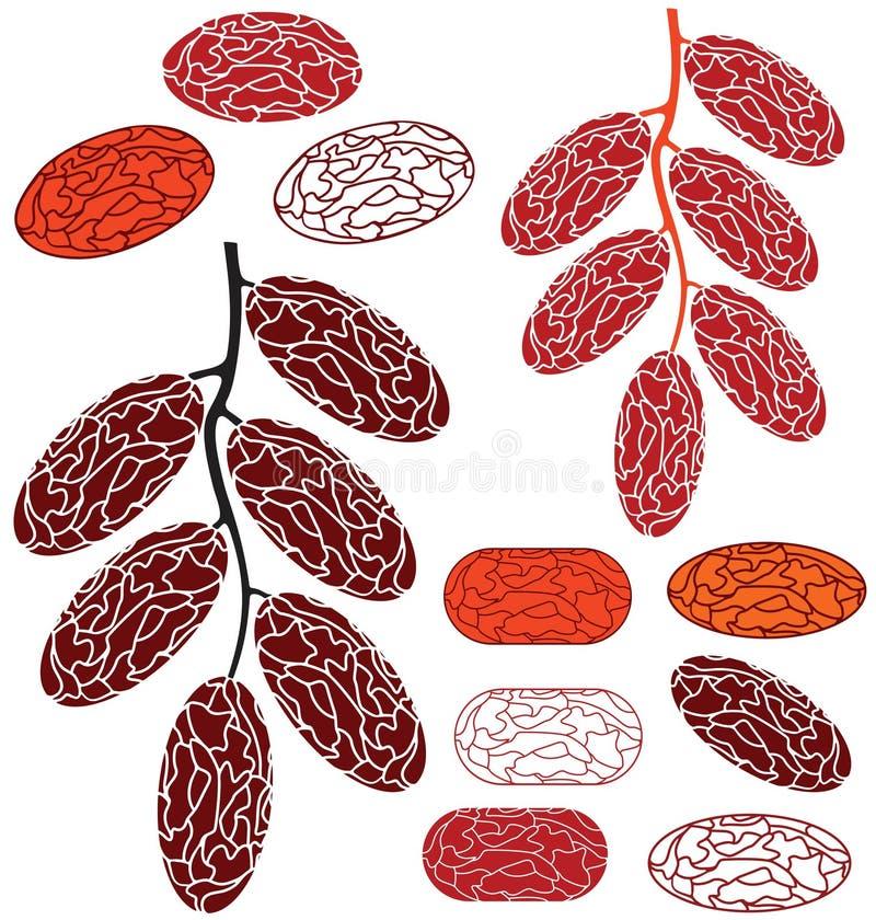 Date. Fruit stock illustration