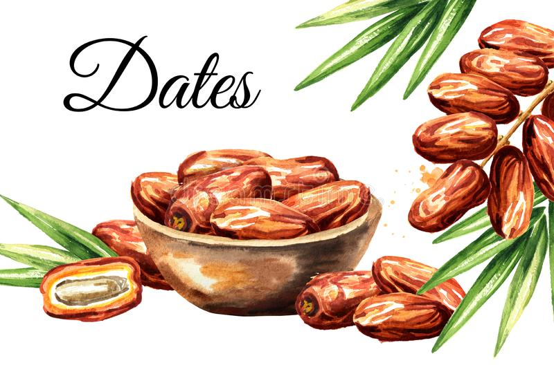 Date fruits card. Watercolor hand drawn illustration, isolated on white background.  royalty free illustration