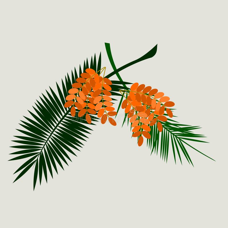 Date Palm Fruit with Leaves stock illustration