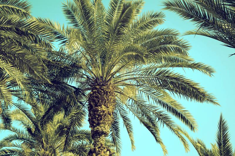 Date palm tree close up against the sky stock images