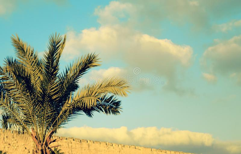 Date palm tree close up against the sky royalty free stock images
