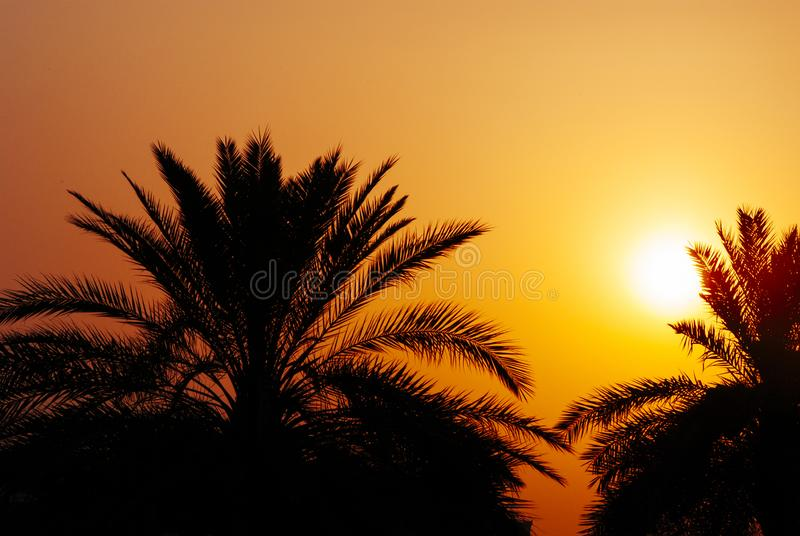 Date palm tree silhouette at beautiful sunset in Dubai, UAE. Palms, orange sky and sun on persian gulf beach. Middle east hoiday. Travel background design royalty free stock photos